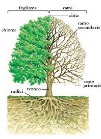 descrizione di un albero