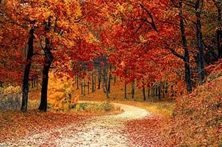 immagini-di-alberi-in-autunno