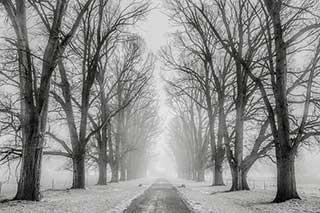 mmagini-di-alberi-in-inverno