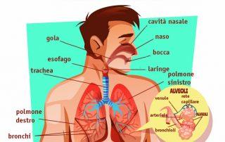 schema apparato respiratorio