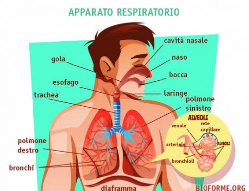 L'apparato respiratorio: uno schema riassuntivo